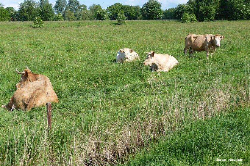 Nachhaltige Milch