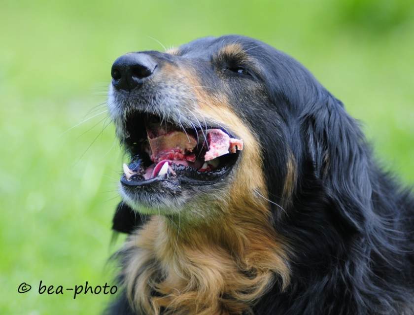 Nachhaltig ernaehrter Hund