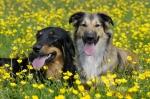 Nachhaltig gefütterte Hunde