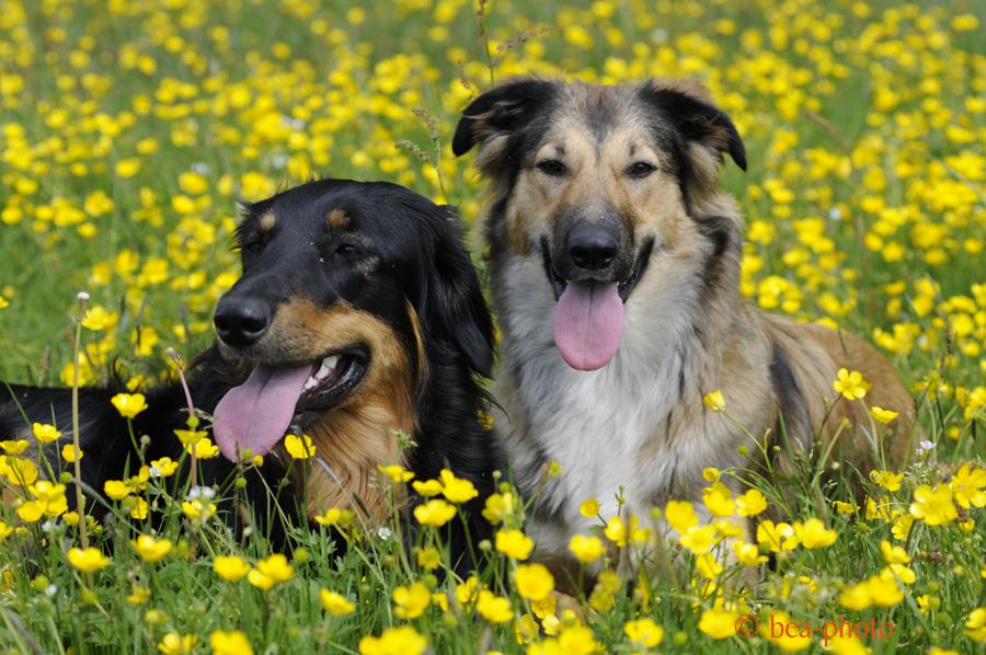 Nachhaltiges Hundefutter – geht das? | selbstversucht