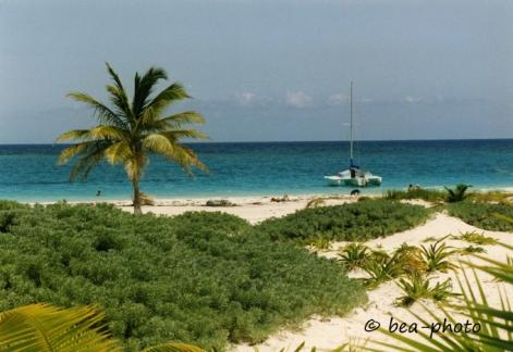 Sonne, Wasser, Strand und die Kokospalme gehören einfach zusammen.