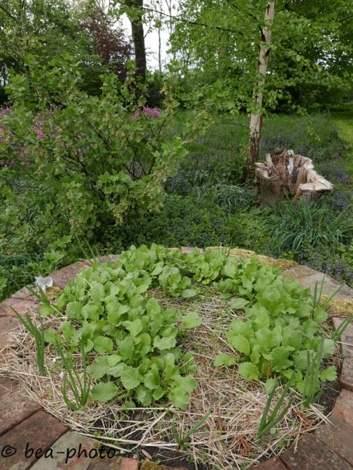 Gemüse und Beerensträucher wachsen unter einer Esche.