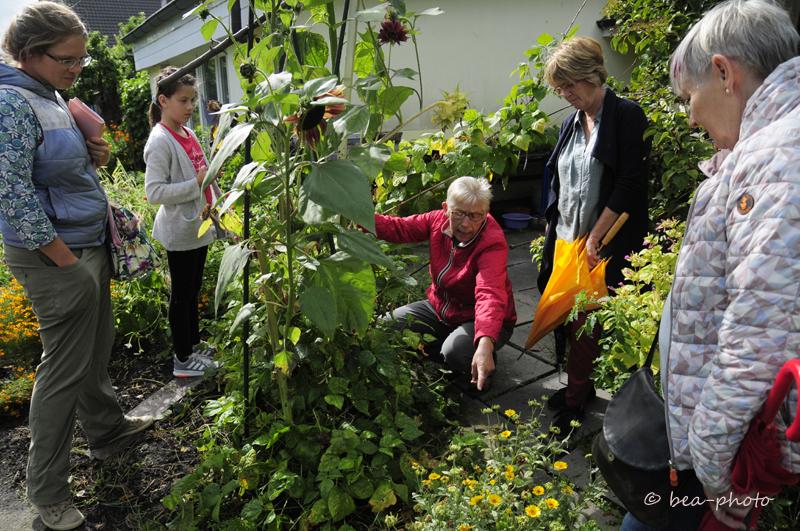Mischkultur gehört zum Prinzip des Vielfaltsgartens von Renate Düring.