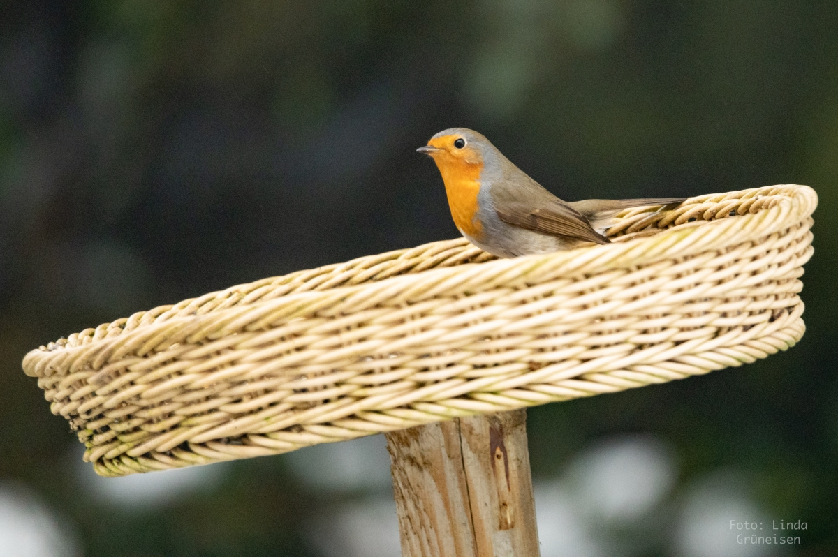 Hilfreiche Tipps für glückliche Wildvögel im winterlichenGarten