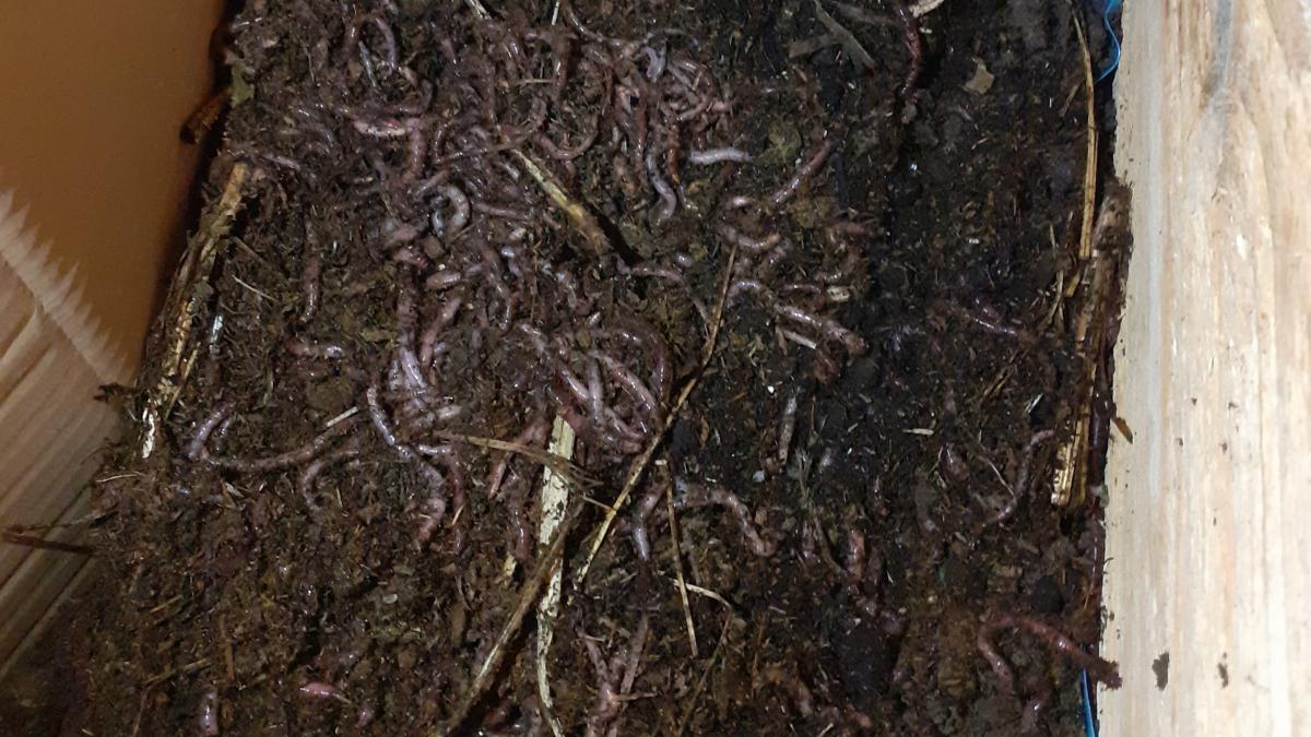 Würmer in der Küche! Die neuenMitbewohner